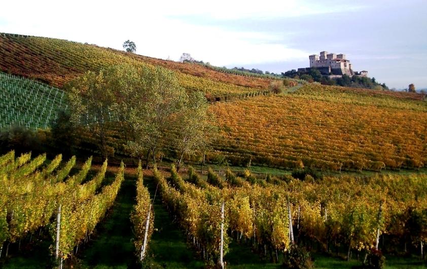 - Uva allo stato naturale - La base dei nostri vini genuini - Lambrusco, Malvasia, Fortana ...